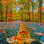 """autumn country road"" by digidreamgrafix"