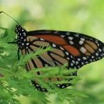 """Butterfly"" by imelda"