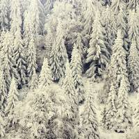 Forest in winter Art Prints & Posters by adinabulina