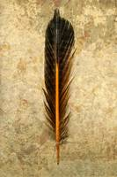 Flicker Feather