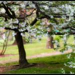 """Blossom"" by craydancer"