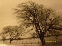 'harsh day of winter in the country even for trees
