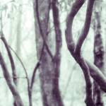 """Woodland Photographic Artwork"" by NatalieKinnear"