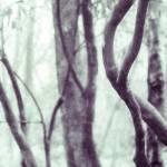 """Woodland Photographic Artwork"" by NatalieKinnear"
