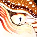 """Chambered Nautilus"" by Kristin-Serafini"