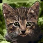 """""""Kitten"""" by AnneVis"""