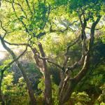"""Fairytale Tree"" by JimLipschutz"
