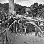 """Roots"" by JimLipschutz"