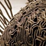 """""""Brain Coral - Version 2"""" by JimLipschutz"""