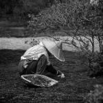 """Japanese Gardener"" by JimLipschutz"