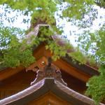 """Japanese Roof"" by JimLipschutz"