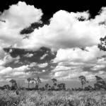 """Florida Sky"" by JimLipschutz"