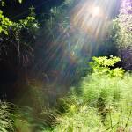 """Heavenly Light"" by JimLipschutz"