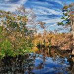 """Loxahatchee Panorama"" by JimLipschutz"