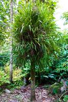 Shaggy Tropical Tree
