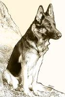 German Shepherd, Two