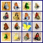 """""""Sixteen Butterflies"""" by mariancates"""