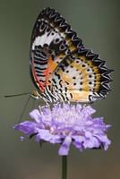 orange and black butterfly on purple flower