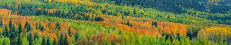Autumn in the Rockies I