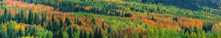 Autumn in the Rockies II