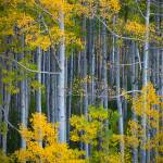 """Colorado Fall Color"" by Inge-Johnsson"