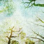 """Trees Up High Abstract Photographic Art - Natalie"" by NatalieKinnear"