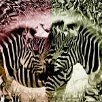 """Zebra Flash"" by 12Steps"