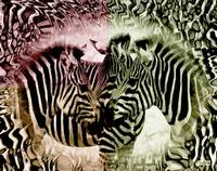 Zebra Flash