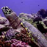"""""""Turtle Chillin"""" by Thermocline"""