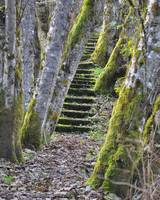 The Moss Stairs