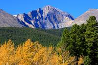 Longs Peak Autumn Aspen Landscape View