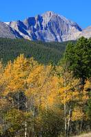 Autumn Aspens and Longs Peak