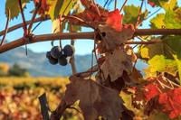 Autumn In The Wine Country