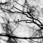 """""""bird in tree PIC 2379"""" by bigrock99"""