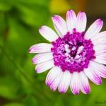 """""""Purple Zinnia"""" by WildAboutNaturePhotography"""