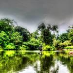 """Botanic Garden Swan Lake - Singapore Garden Series"" by sghomedeco"