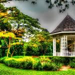 """Botanic Garden 2013 - Singapore Garden Series"" by sghomedeco"
