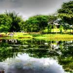 """Tropic Garden Series - Botanic Garden Singapore"" by sghomedeco"