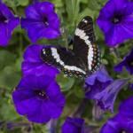 """""""Butterfly Garden"""" by Dullinger"""