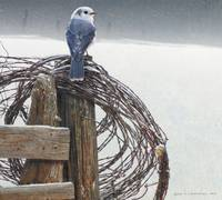 snowy spool of barbed wire canada jay