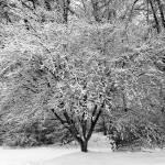 """""""Red Oak in Winter (8211)"""" by Fotofrieze"""