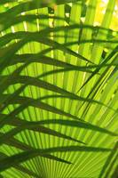 Palm Frond Layers