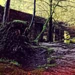 """""""Woodland walk"""" by PeteMoyes"""