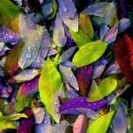 """Lavender & Lime"" by judithschmidt"