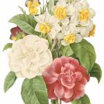 """Camellia, Narcissus and Pansy Botanical Art"" by ArtLoversOnline"