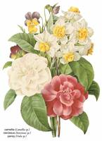 Camellia, Narcissus and Pansy Botanical Art