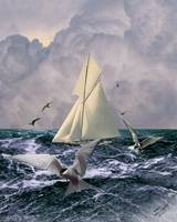 Sailing with the Terns