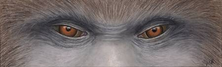 SASQUATCH EYES (BIGFOOT)