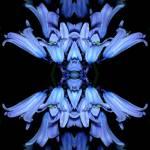 """""""mantis.blossom"""" by gnonaut"""