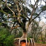 """SPIDER TREE    LARRY KIP HAYES  PHOTO"" by kiphayes"